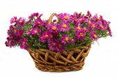 picture of flower arrangement  - Picture of the basket of flowers on a white background - JPG