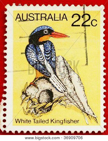 White Tailed Kingfisher