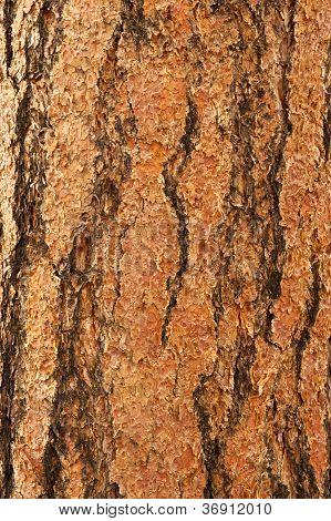 Ponderosa Pine Bark Vertical