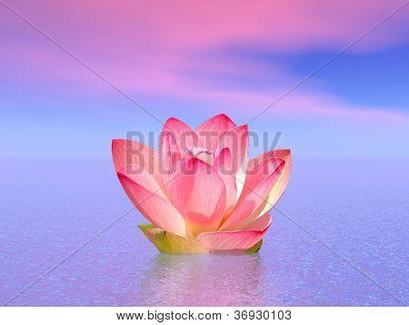 Lily Flower In Ocean