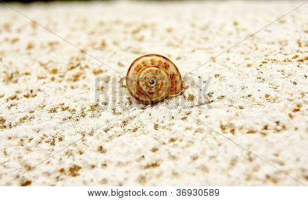 snail in a wall