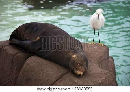 Bird and Seal on Rock