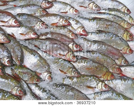 Frozen Fish - Perch