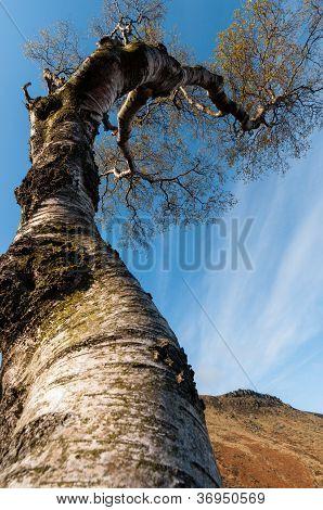 Baum Himmel berühren