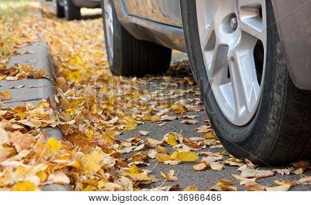 stale leaves