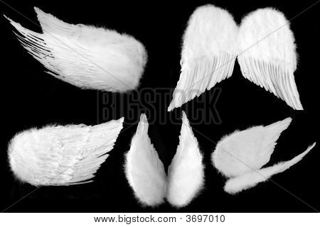 Many Angles Of Guardian Angel Wings Isolated On Black