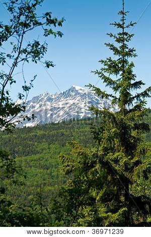 Forest And Mountains In Skagway, Alasak