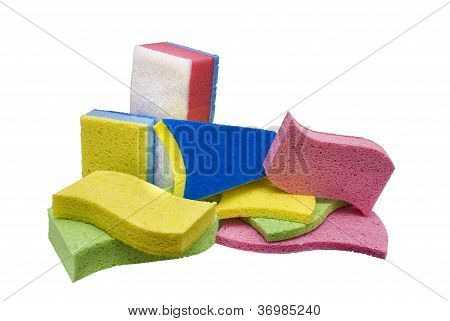 Showcase Of Many Sponges