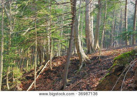 Trees On Edge