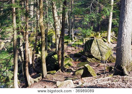 Wooded Image