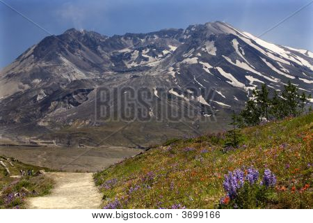 Wildflowers Trail Mount Saint Helens National Park Washington
