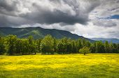 stock photo of cade  - Cades Cove Spring Flowers Great Smoky Mountains National Park Fields with dramatic sky and Appalachian mountain peaks - JPG