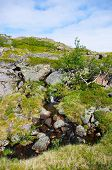 picture of murmansk  - Landscape of the polar summer tundra - JPG