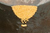 stock photo of gold panning  - Natural placer gold and nuggets in an old gold pan - JPG