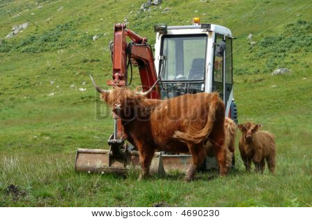 Scottish Beefs Con Ruspa