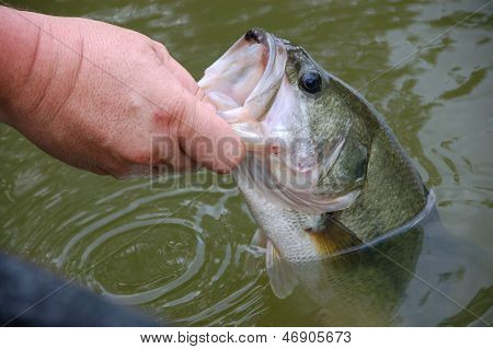bass catch and release