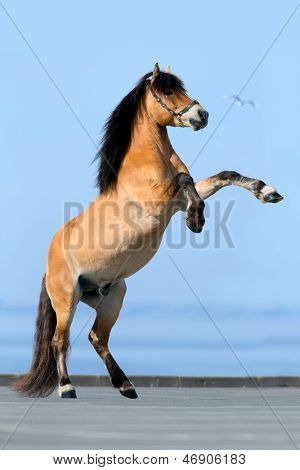 Rearing horse on blue background along seacoast.