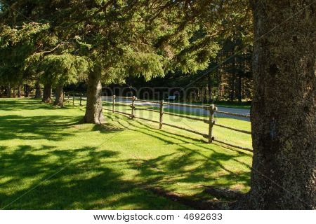 Tree-lined Lane With Fence