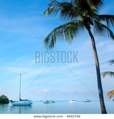 Tropical Vista