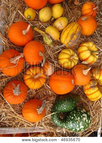 colorful assortment of pumpkins and gourds
