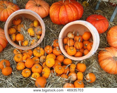 an arrangement of pumpkins and gourds with dish