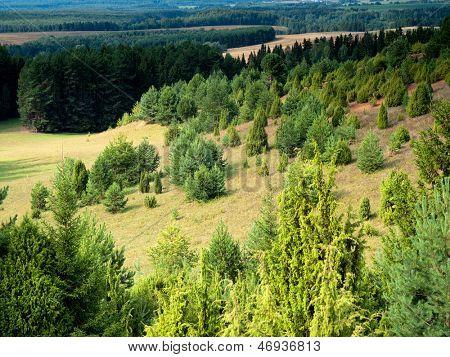 juniper bushes on the hills