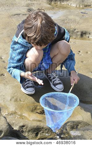 Play In Tidepools
