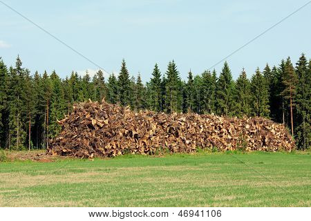 Heap Of Stump Wood As Logging Residue