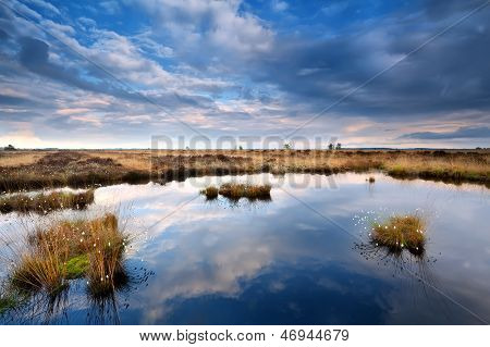 Blue Cloudscape Over Swamp
