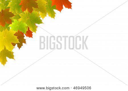 Autumn Maple Leafs Background - Herbstlicher Hintergrund