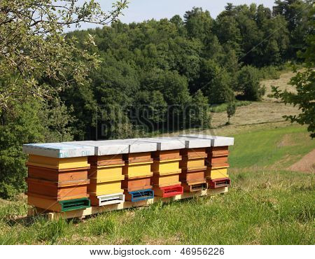Beehives in garden with green grass