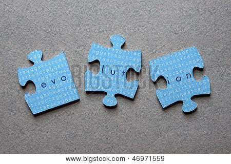 Evolution Jigsaw Mismatched