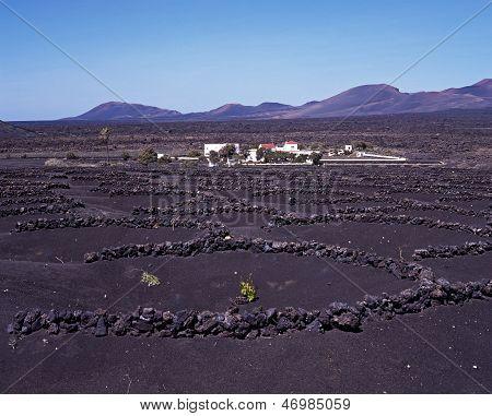 Vineyard with volcanic soil, Lanzarote.