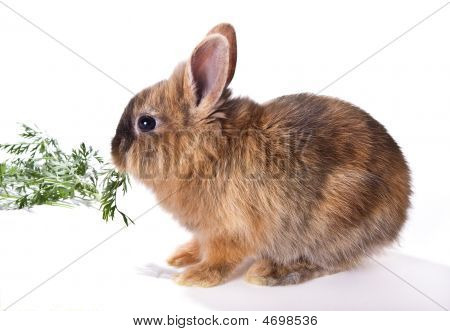 Eating Rabbit