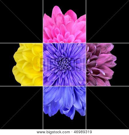 Colorful Chrysanthemum Flower Mosaic Design