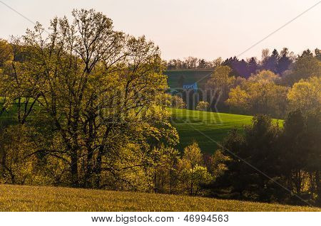 Evening Light On Trees And Rolling Hills Of Southern York County, Pennsylvania.