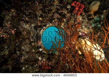 Coral On The Thistlegorm