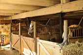 picture of stable horse  - Horse stables with wooden doors and horses - JPG