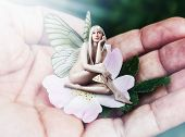 foto of pixie  - Beautiful sexy woman pixie with butterfly wings sitting on a tender pink flower in male hand - JPG