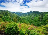 stock photo of gatlinburg  - Summer landscape in the Smoky Mountains near Gatlinburg - JPG