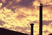 stock photo of pigeon loft  - Background of Sky on Sunset with Pigeon Bird silhouette sitting on roof chimney - JPG