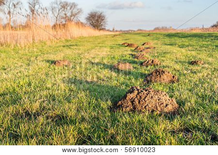 Molehills In The Low Sunlight