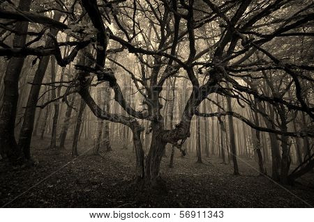 Dark eerie spooky tree in a forest with fog on halloween