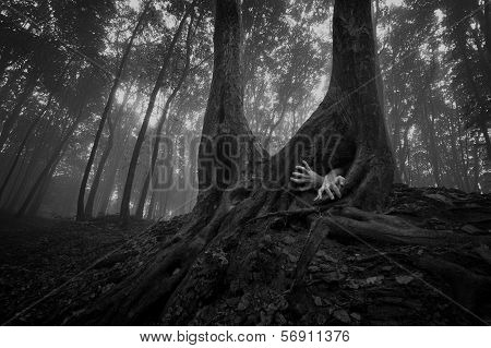 Horror hands coming out of tree burrow in a dark eerie spooky creepy forest with fog