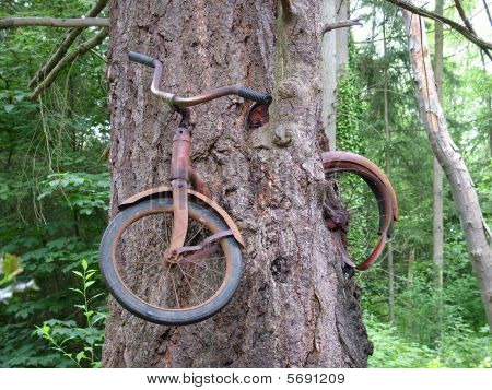 Bike Inside of Tree
