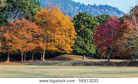 Autumn Laves At Nara Park In Nara