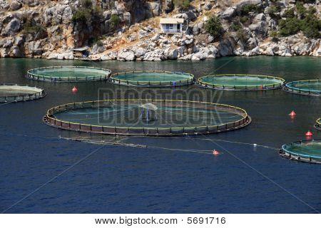 Fish Farm, Greece