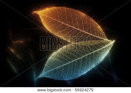 Sparkling Skeletal Leaves On Black