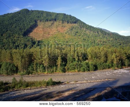Nooksack River Clearcut