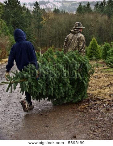 Father and Son Carry Fresh Cut Christmas Tree